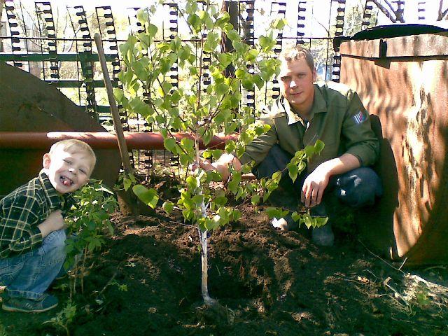 Как сделать опору для дерева